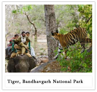 Bandhavgarh National Park'