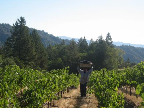 Hess Vineyards'