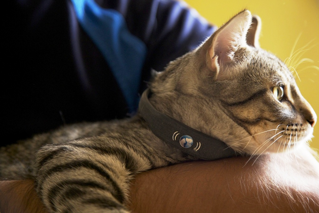 petTracer Cat Tracking Collar