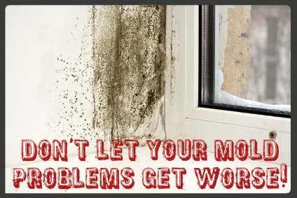 Mold Remediation Pros'