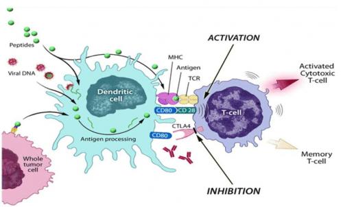 Provectus driven tumor immunity'