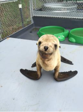 Rescued Baby Sea Lion