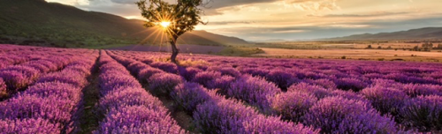 Home scenting with essential oil supports global agriculture'