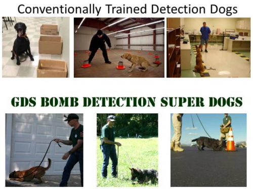 Bomb Detection Super Dogs'