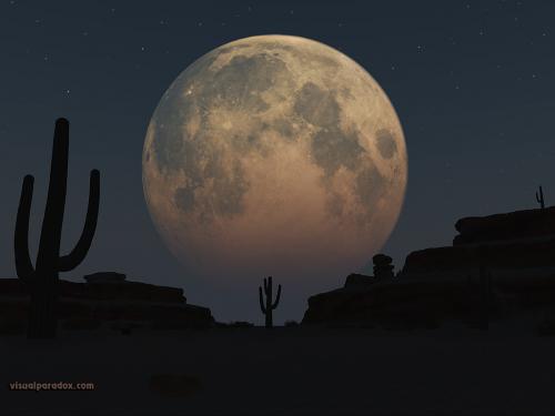 Tour the Arizona Desert Under a Full Moon'
