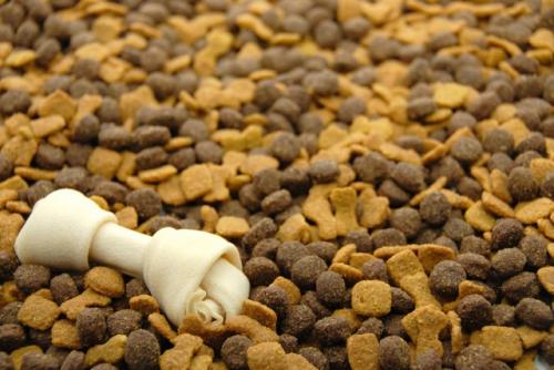 best dog food'