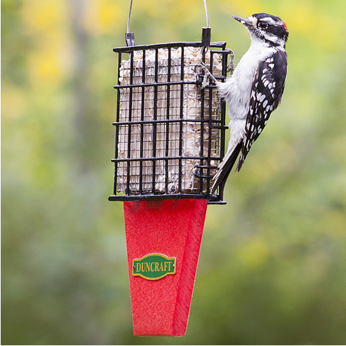 Tail Prop Suet Shield Feeder