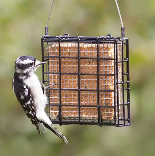 Suet Shield Blocker Feeder
