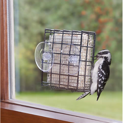 Window Suet Shield Blocker Feeder