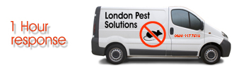 London Pest Solutions'