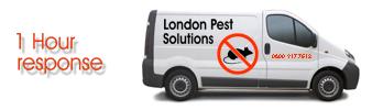 London Pest Solutions'