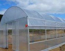 greenhouse film'