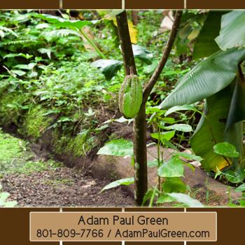 Adam Paul Green'