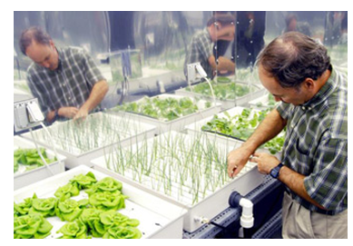 Hydroponics bringsbenefits even at times of illness: Bradfor'