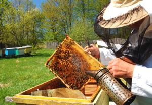 Bee Removal Usa'