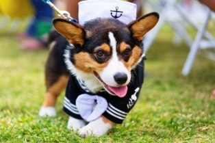 National Dress Up Your Pet Day'