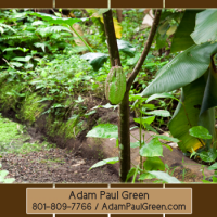 Adam Paul Green